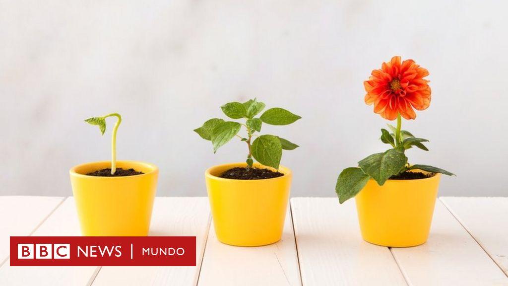 Cómo las plantas con flores evolucionaron y conquistaron el mundo hace millones de años
