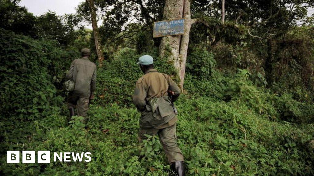 Rangers killed at Congo gorilla park