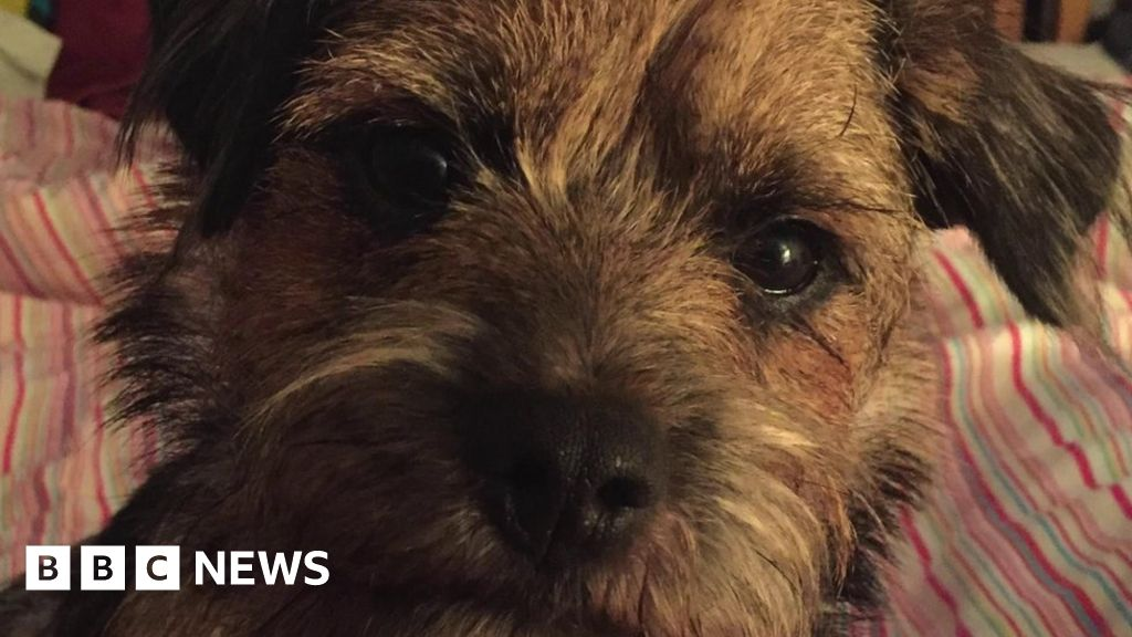 Puppy in Simon Cowell reward offer turns up safe in Kent