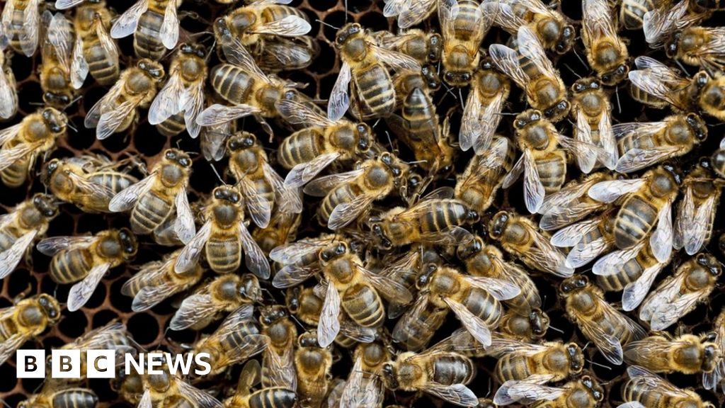 Large-scale study 'shows neonic pesticides harm bees ...