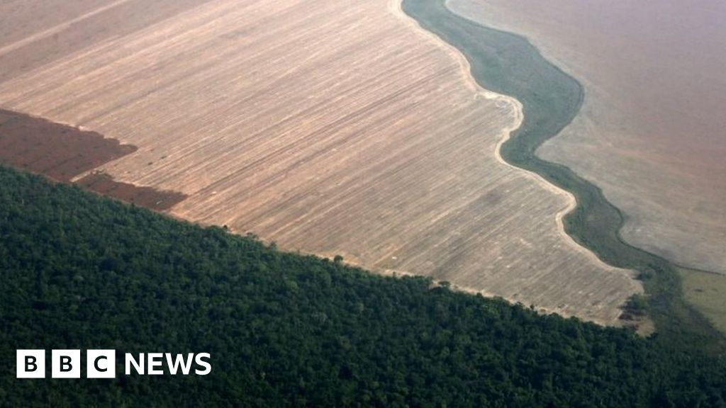 Amazon forest safeguards relaxed in Brazil thumbnail