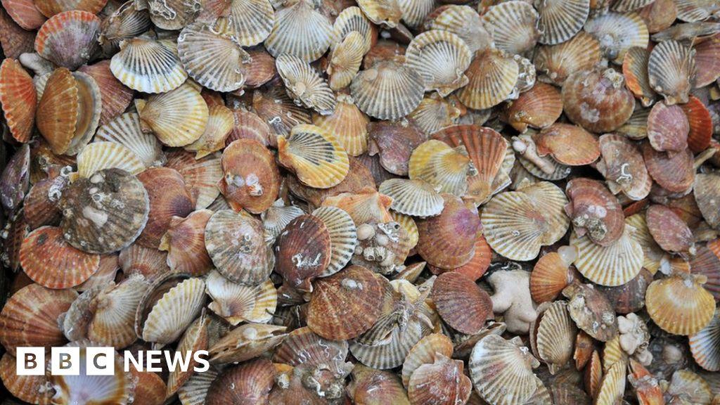 Isle of Man scallop fishing rules take effect despite Scottish concerns