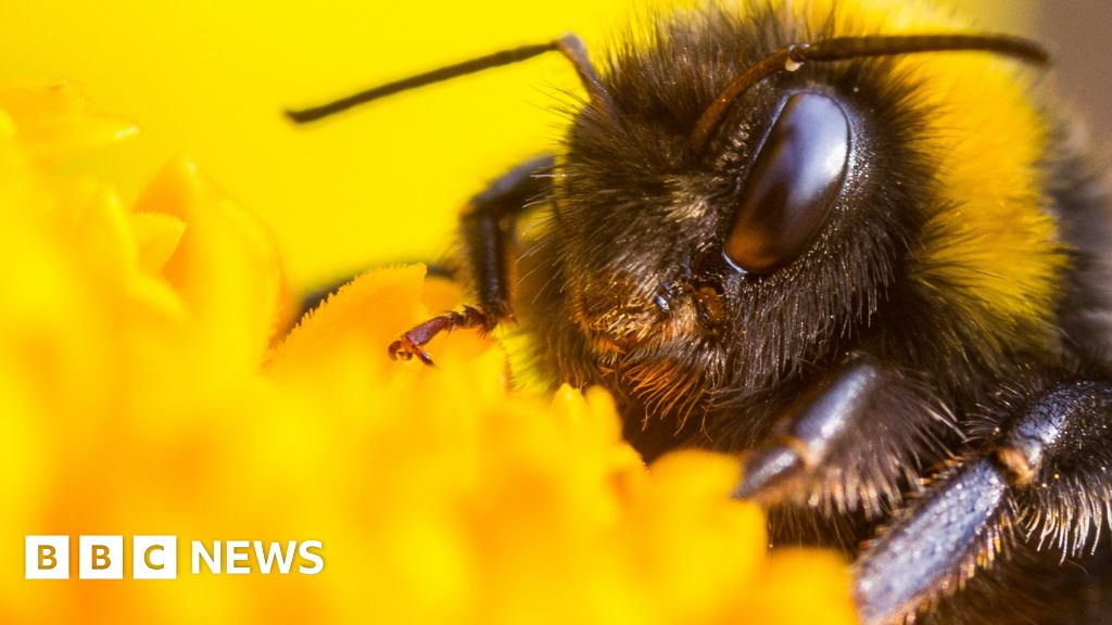 CEO Secrets: What I learnt from bees - BBC News