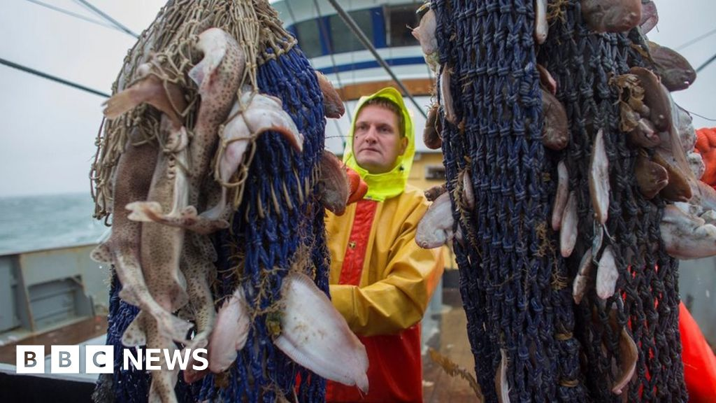 MEPs vote to ban 'electrical pulse fishing'