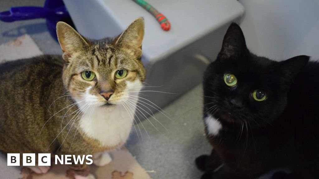 Unwanted Yorkshire cats sent to London