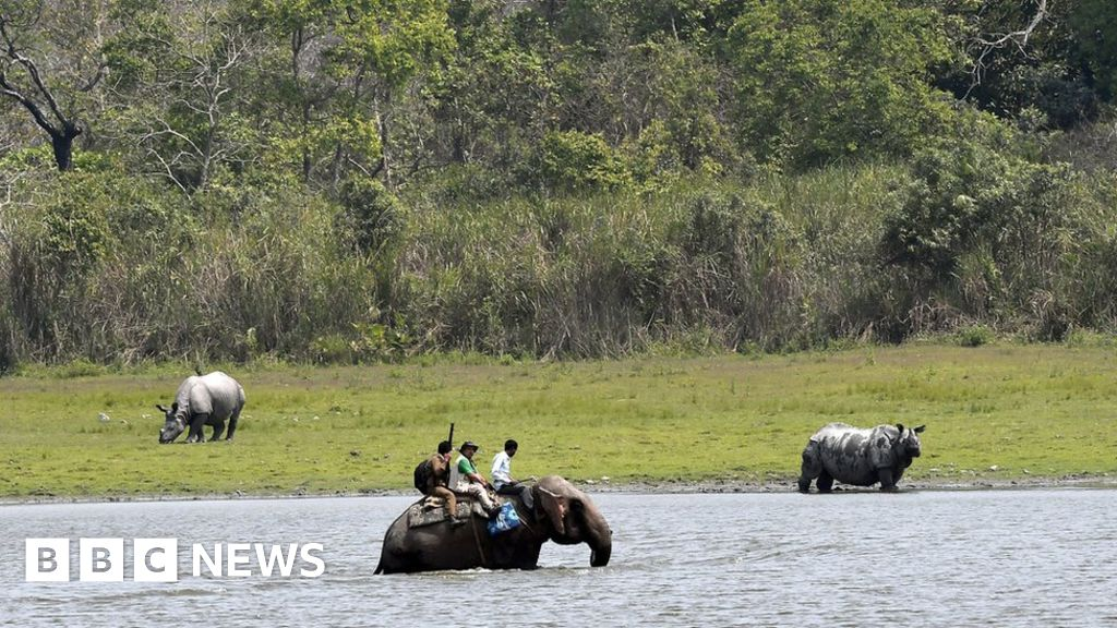 India finds more rhinos in Kaziranga park
