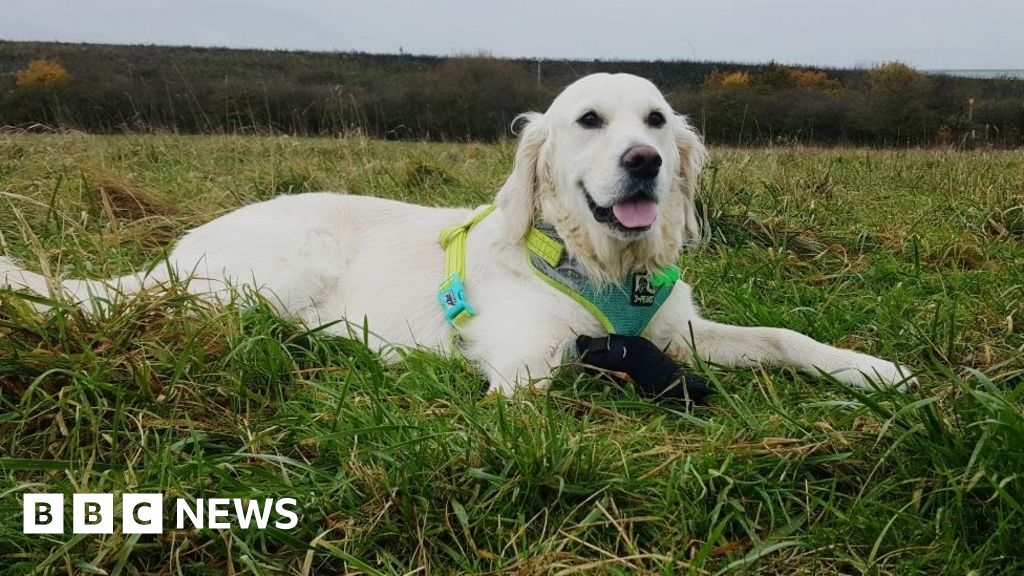 Dog Rescue South Wales Uk