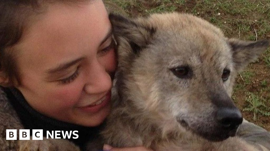 Vietnam dog gives UK rescuer slip in Paris