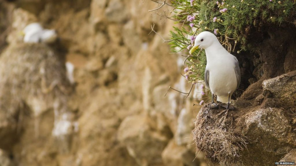 'Worrying alarm call' for world's birds on brink of extinction