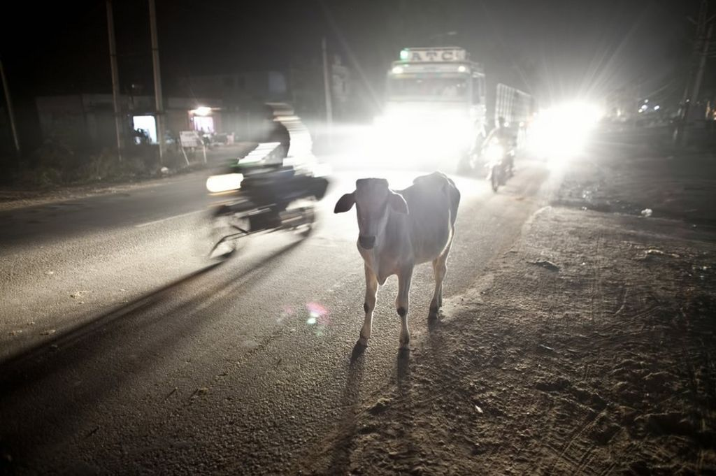 Arrest after 'cow vigilantes' lynch man