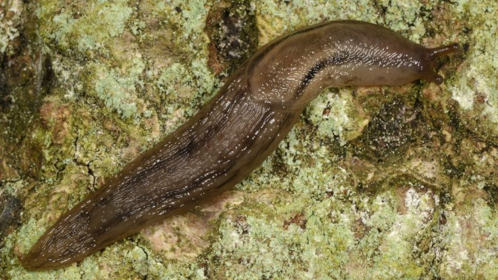 Slimy slugs inspire 'potentially lifesaving' medical glue