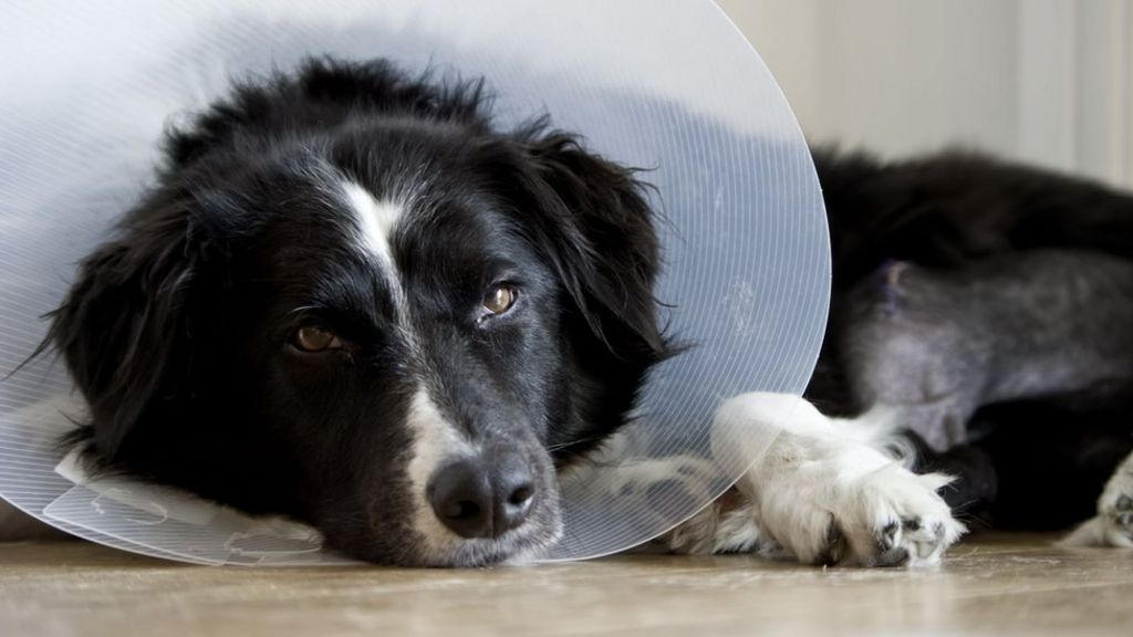 Italian granted sick pay to look after dog