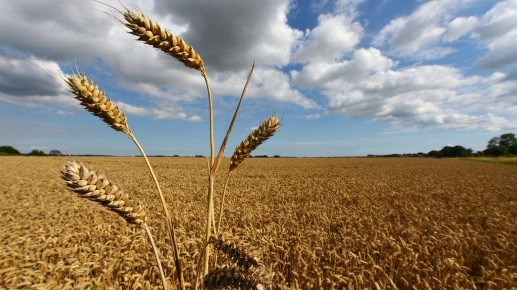 Agricultural subsidy | Revolvy