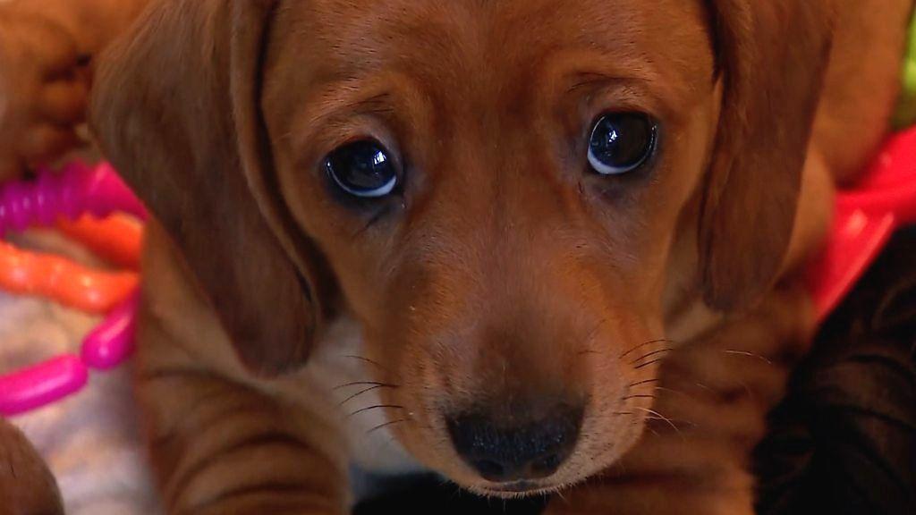 Sport Dog Food Puppy