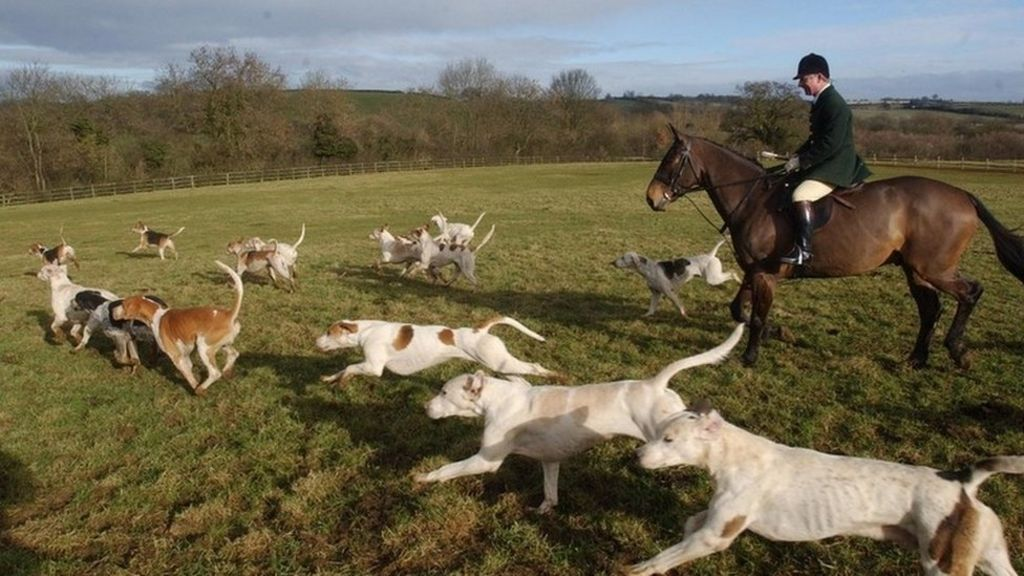 RSPCA to become 'less adversarial'