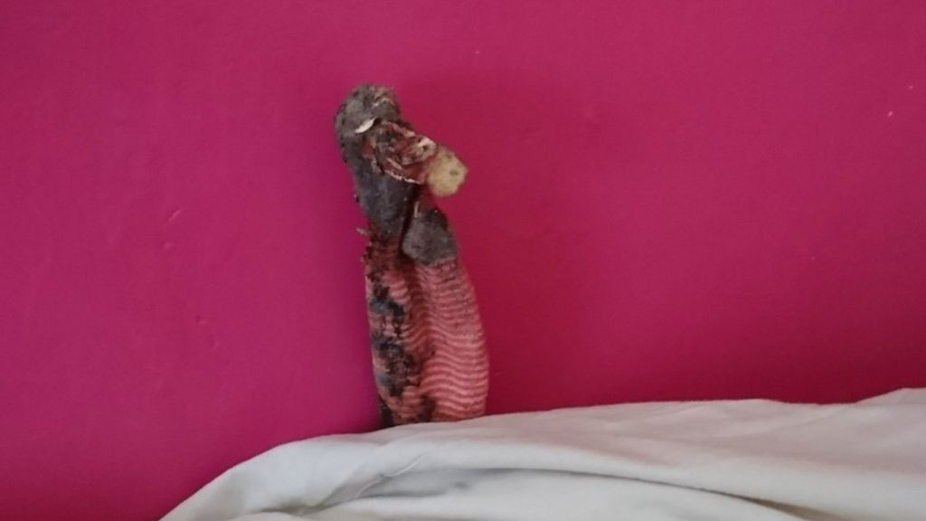 Lizard rescue turns out to be dirty sock