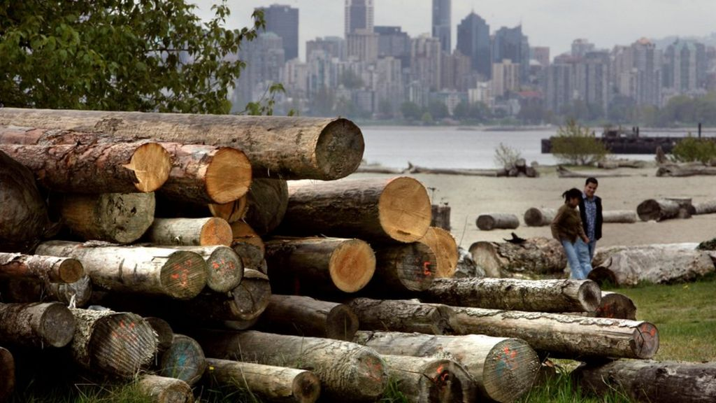 canadian softwood lumber essay The tariffs on canadian softwood lumber are acting as a tax on american home builders and home buyers, making housing less affordable for american families and forcing builders to look overseas to other markets, including sweden, germany and russia, in order to meet demand.