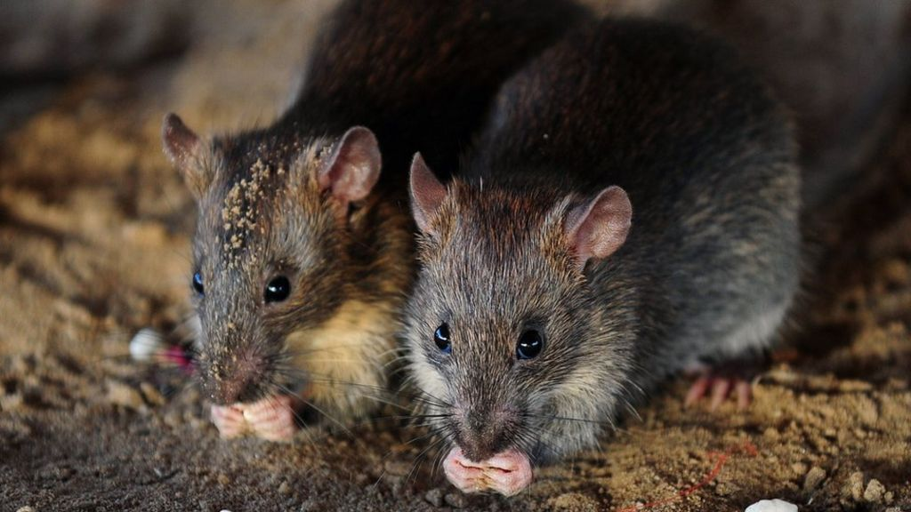 Girl mutilated by rats in French home