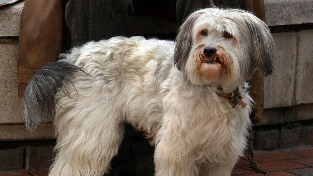 Britain's Got Talent champion dog Pudsey dies