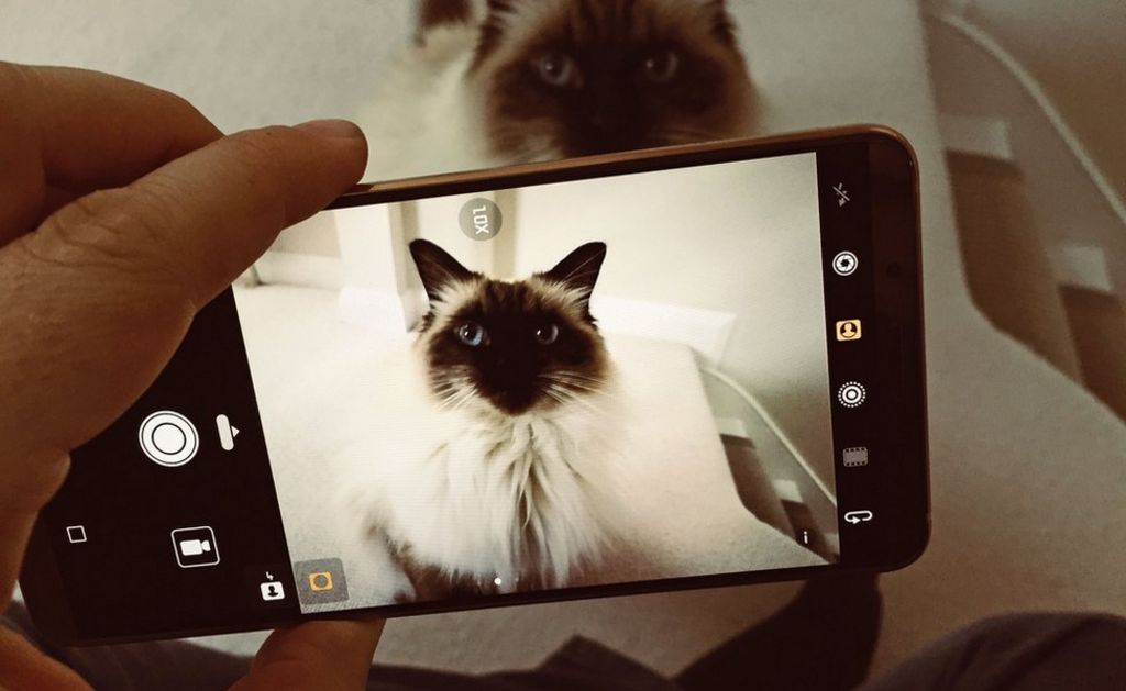Huawei Mate 10 uses AI to distinguish cats from dogs