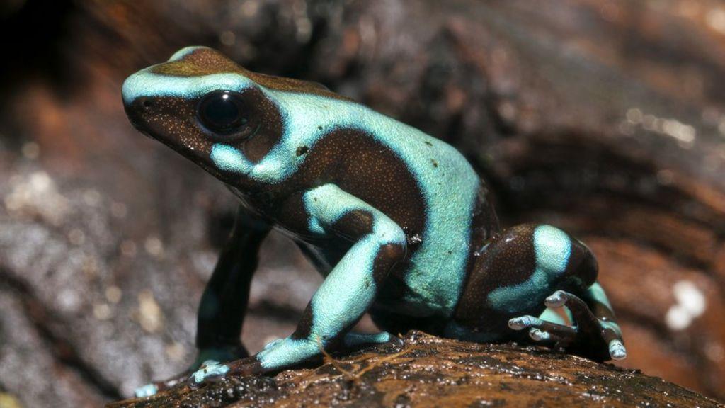 Frog evolution linked to dinosaur asteroid strike