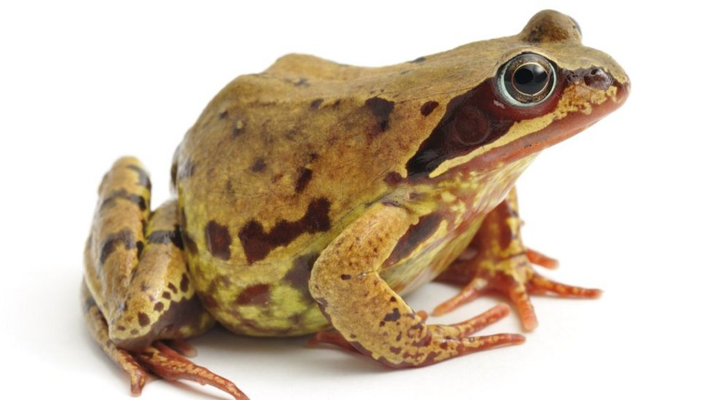 At least 50 frogs dumped in aldi car park in finchley for Frog london