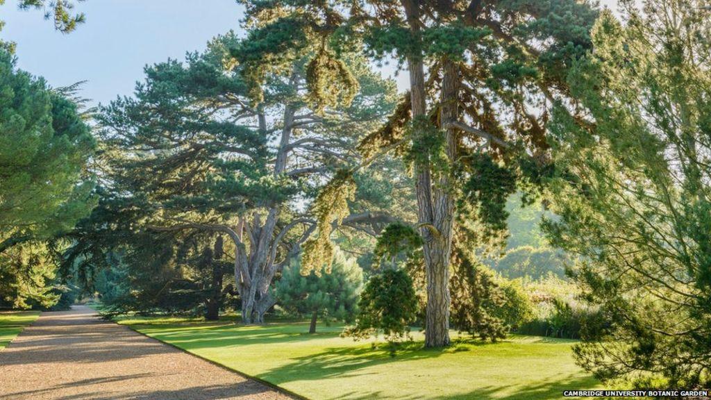Botanic gardens 'key to saving plants' - Wadsworth Control Systems Inc 2017-09-28 22:46