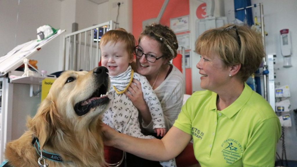 Don't be scared to let animals on wards, say nurses