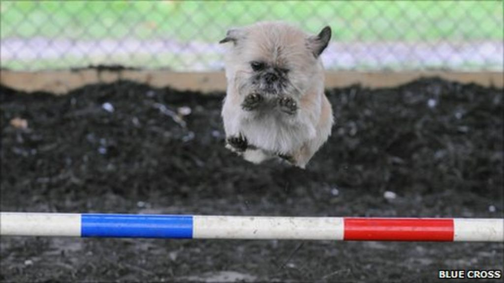 Rescue Dog Southampton Uk