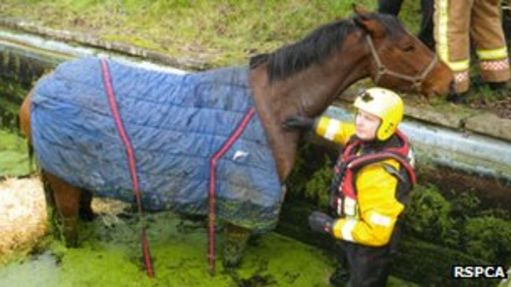Horse rescued from swimming pool in worcestershire bbc news for Negative show pool horse racing