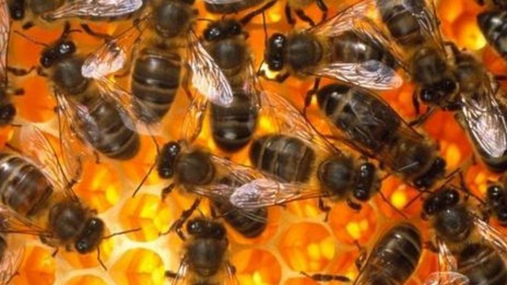 Bee hive hums recorded to monitor insects' health - BBC News