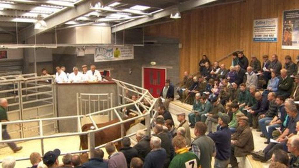 Success Story Of New Hereford Livestock Market Site Bbc News