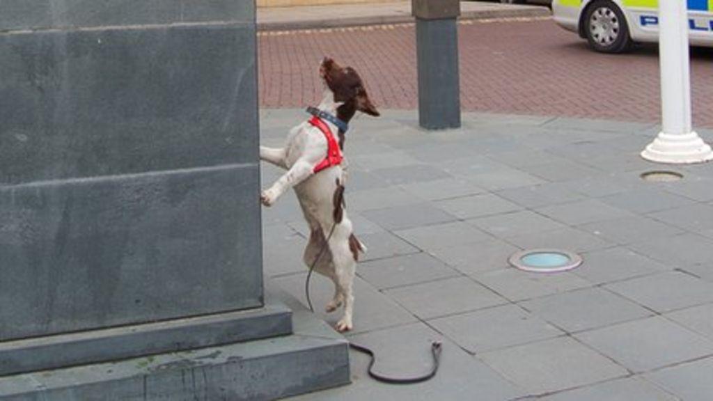 Dog Training In Moline