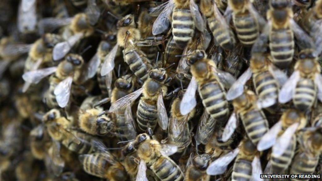 Honeybee shortage threatens crop pollination in Europe ...