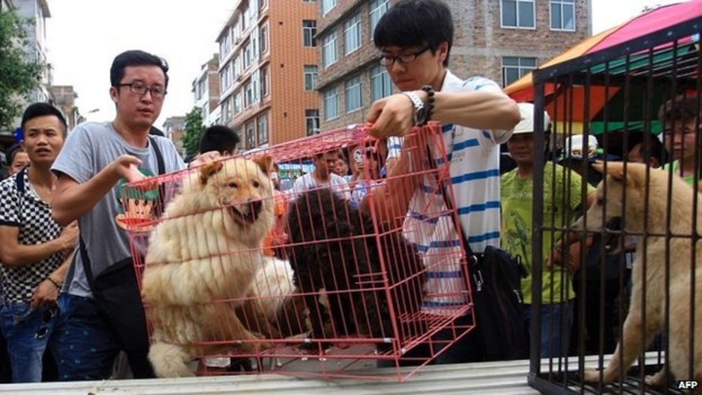 What Kind Of Dogs Do They Eat In China