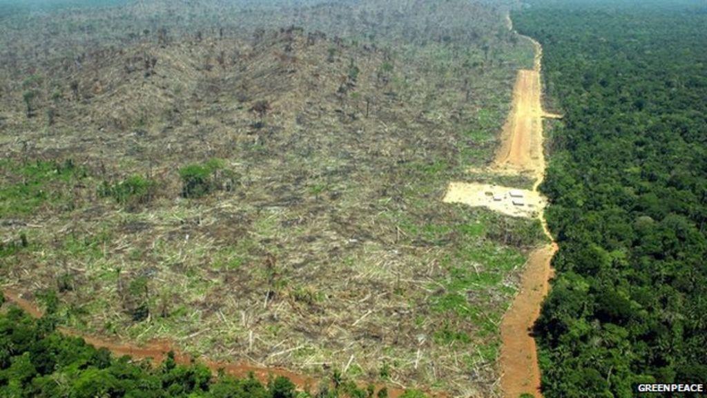 deforestation and minimal logging advantages essay