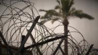 a palm tree and barbed wire