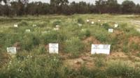 Kato Tritos Cemetery, Lesbos