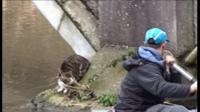 River rescue of tabby cat
