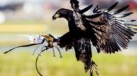 Eagles captures drone mid flight