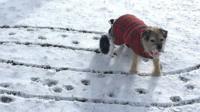Dog in Rotherham