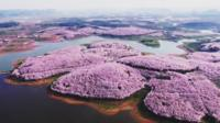 Blossom in south-west China