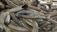 Confiscated ivory in Kenya