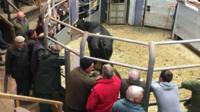 Gaerwen cattle mart