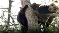 Tatras bears