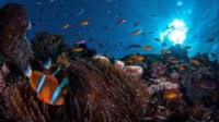 Marine life in the Great Barrier Reef, in the Coral Sea, off the coast of Queensland, Australia
