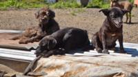 Dogs sunbathing