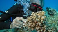 Charlie Veron underwater looking at a coral