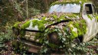 Abandoned car overgrown with moss and ivy