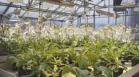 GM plants at the University of Illinois
